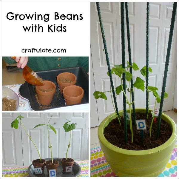 Growing Beans with Kids - a fun and easy family gardening project