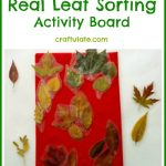 Real Leaf Sorting Activity Board