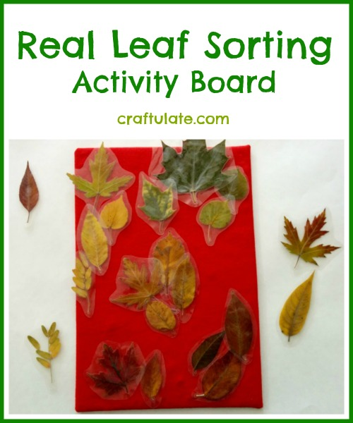 Real Leaf Sorting Activity Board for toddlers and preschoolers