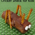 Cricket Snack for Kids