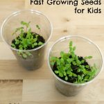 Fast Growing Seeds for Kids